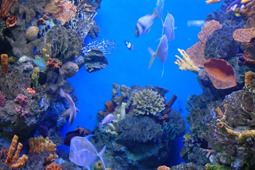 aquarium-barcelona-caribe